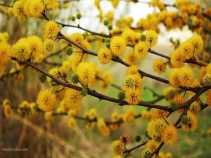 Floreciendo de amarillo