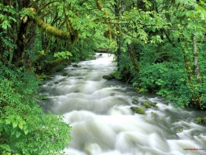 Postal: Agua fluyendo (Parque Nacional Olympic, Washington)
