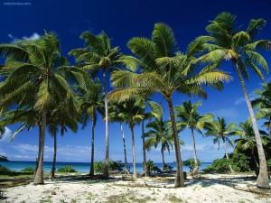 Postal: Palmeras de cocos