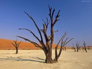 Postal: Dead Vlei, Parque Nacional de Sossusvlei (Namibia, África)