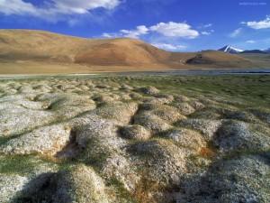 Matas de permafrost (Ladakh, India)