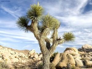 Cactus con forma de árbol