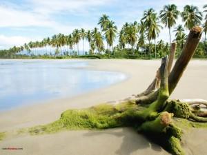 Postal: Playa exótica