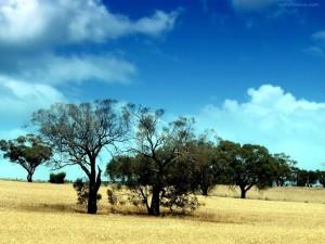 Postal: Árboles secos