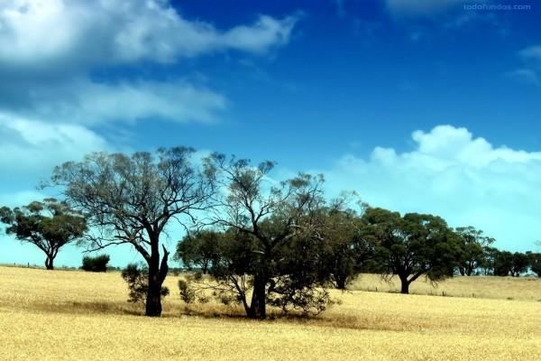 Árboles secos