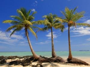 Postal: Pequeña isla con palmeras en Madagascar