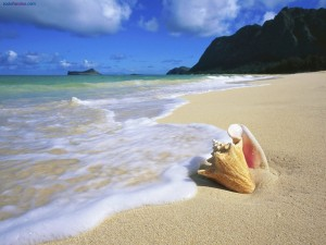 Postal: Concha en la playa