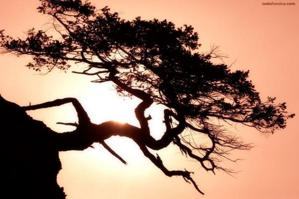 Árbol al pie del barranco