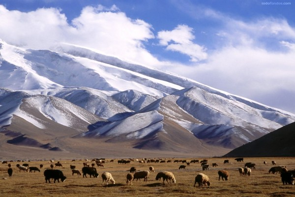 Torre Muztagh (Xinjiang, China)