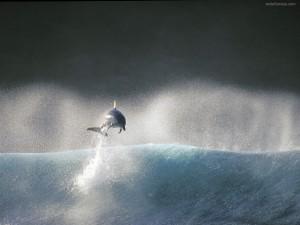 Postal: Delfín saltando sobre una ola