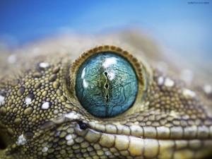 Postal: Ojos de reptil