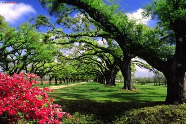 Las plantaciones y jardines de Boone Hall, en Carolina del Sur