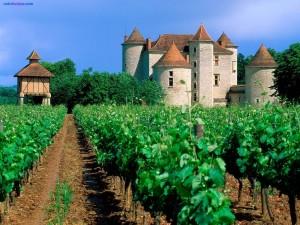 Viñedo en Cahors (Francia)