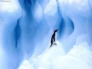 Postal: Pingüino adelaida