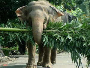 Elefante llevando un árbol