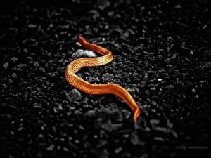 Postal: Serpiente dorada