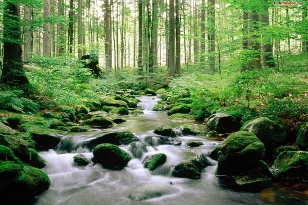 Parque Nacional Bayerischer Wald (Alemania)