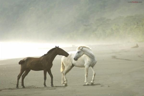 Caballos salvajes en una playa nublada
