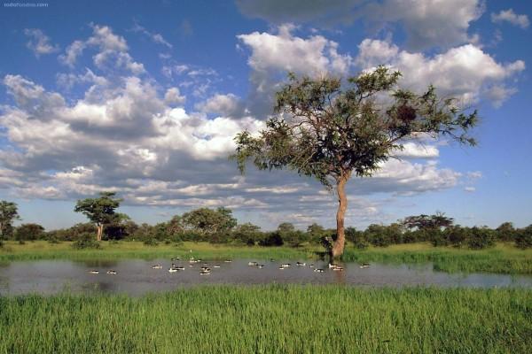 Lago en el Parque Nacional de Chobe (Botsuana)