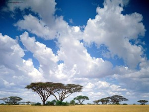 Postal: Masai Mara (Kenia)