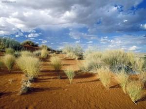 Postal: Parque transfronterizo de Kgalagadi (Sudáfrica)