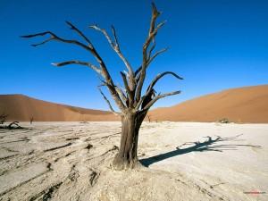 Postal: Árbol seco (Parque Nacional Namib-Naukluft)
