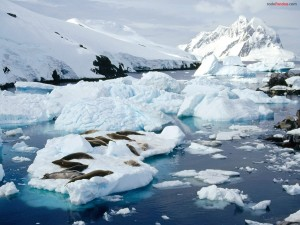 Focas sobre el hielo
