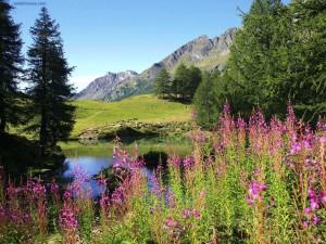 Postal: Bosque y montaña