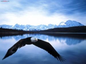 Postal: Águila sobre el lago