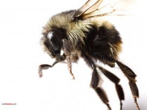 Insecto volador