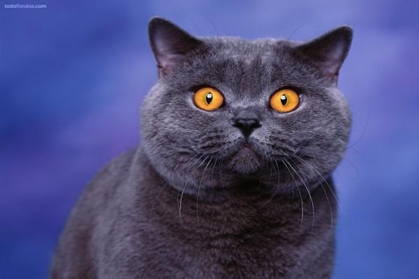 Gato negro con ojos de sorpresa