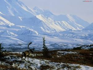 Alce en un paisaje nevado