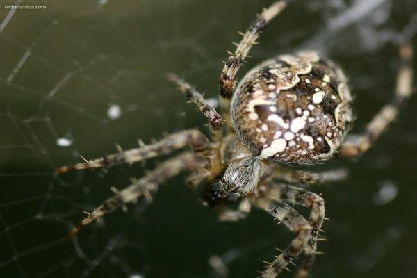 Araña de cerca