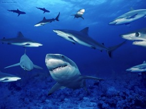 Postal: Manada de tiburones