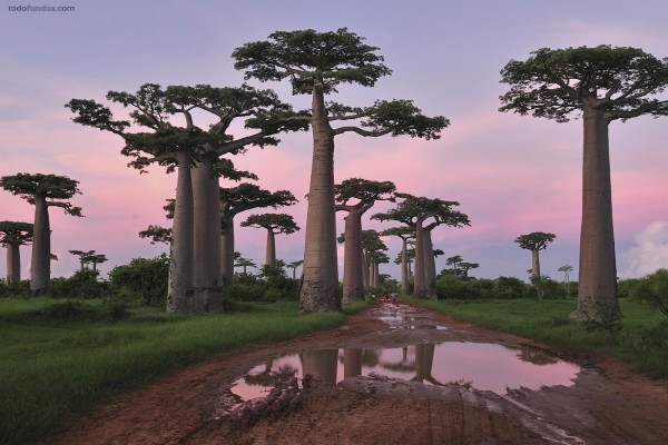 Árboles gigantescos