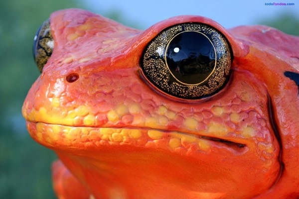 Ojos espectaculares