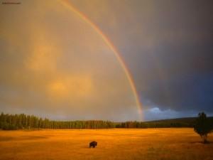 Postal: Arcoíris sobre la pradera