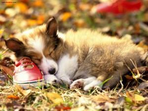 Un zapato como almohada