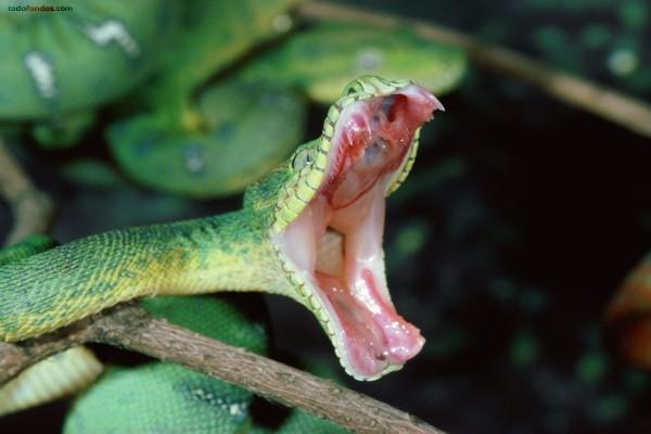 Las fauces de la serpiente