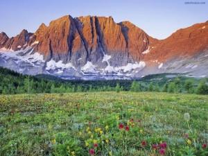 Prado de flores a los pies de la montaña
