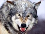 Las fauces del lobo
