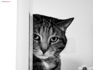 Postal: Gato espiando