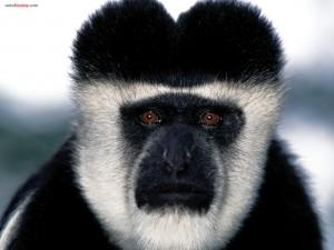 Postal: Mono blanco y negro
