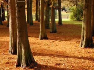 Postal: Troncos de árboles