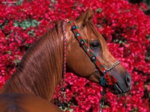 Postal: Cabeza de caballo adornada