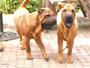 Postal: Perros hermanos