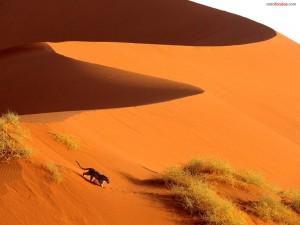 Postal: Leopardo sobre la arena del desierto