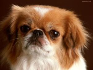 Postal: Perro enfadado