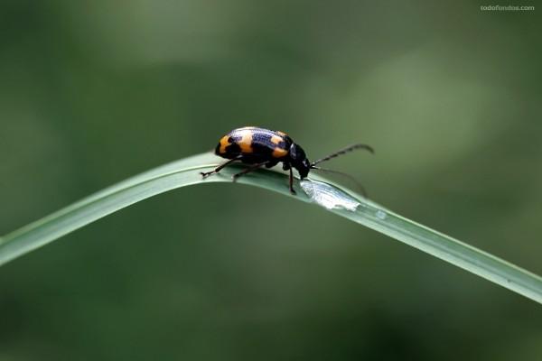 Insecto bebiendo agua