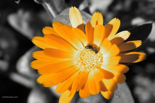 Insecto volador en una flor amarilla